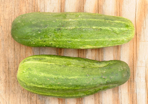 Compare pickle cucumber pollination