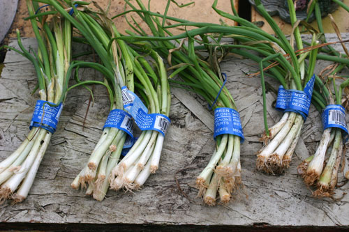 Green onions dried out